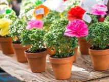 Las plantas de la albahaca con las flores de papel y los poemas vendieron en St Anthony fotografía de archivo