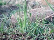 Las plantas de Littil también tienen una diversa formación apic de n Fotografía de archivo libre de regalías