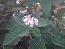 Las plantas de Littil también tienen una diversa formación apic de n Imágenes de archivo libres de regalías