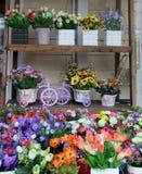 Las plantas de tiesto verdes se muestran en el estante Imagen de archivo libre de regalías