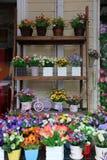 Las plantas de tiesto verdes se muestran en el estante Imagenes de archivo
