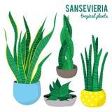Las plantas del Sansevieria en diversas formas de los potes de cerámica en el fondo blanco aislaron vectores stock de ilustración