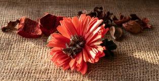Las plantas desecadas y texturizadas aislaron la flor en el saco de la arpillera imagen de archivo