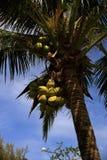 Las plantas en el área del hotel, palma, Phra AE varan, Ko Lanta, Tailandia Imagen de archivo libre de regalías