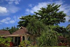 Las plantas en el área del hotel, palma, Phra AE varan, Ko Lanta, Tailandia Foto de archivo libre de regalías