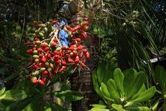 Las plantas en el área del hotel, palma, Phra AE varan, Ko Lanta, Tailandia Imágenes de archivo libres de regalías
