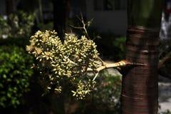 Las plantas en el área del hotel, palma, Phra AE varan, Ko Lanta, Tailandia Imagenes de archivo