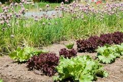 Las plantas en el garten acuestan en el verano Imagen de archivo libre de regalías
