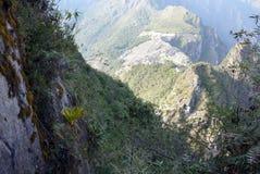 Las plantas exóticas se aferran en una cara escarpada del acantilado Foto de archivo