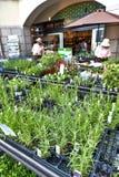 Las plantas herbarias vendieron en el mercado herbario, Nunobiki Herb Garden en el soporte Rokko en Kobe, Japón Imagen de archivo libre de regalías