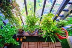 Las plantas naturales en los potes de la ejecución en el balcón cultivan un huerto Imagenes de archivo