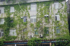Las plantas se están arrastrando con la pared externa del edificio Fotos de archivo libres de regalías