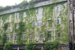 Las plantas se están arrastrando con la pared externa del edificio Imagen de archivo libre de regalías