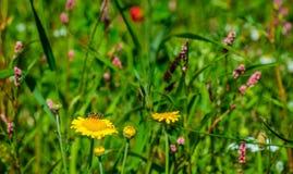 Las plantas sembradas coloridas de florecimiento en un campo holandés afilan Imagen de archivo