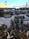Las plantas son nosotros Foto de archivo