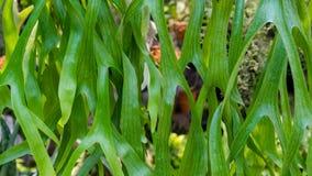 Las plantas, también llamadas las plantas verdes, son eucariotas multicelulares Imágenes de archivo libres de regalías