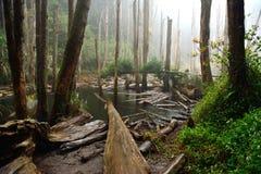 Las plantas tropicales abundan en la selva Fotografía de archivo