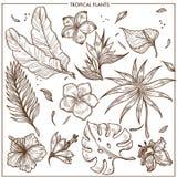 Las plantas tropicales y el vector exótico del bosquejo de las flores aislaron la colección fijada los iconos ilustración del vector