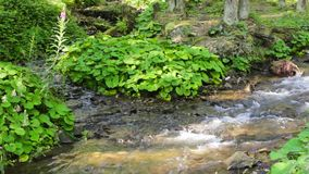 Las plantas verdes acercan al sream en el bosque almacen de metraje de vídeo
