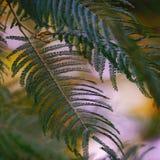 Las plantas verdes en el jardín foto de archivo libre de regalías