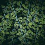 Las plantas verdes en el jardín fotografía de archivo