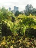 Las plantas verdes en parque de la ciudad cultivan un huerto con la vista de la ciudad en fondo imágenes de archivo libres de regalías