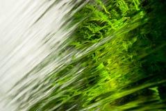 Las plantas verdes hermosas crecen detrás de la cascada clara Imagen de archivo