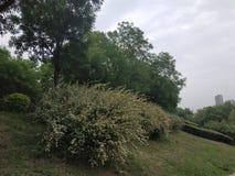 Las plantas verdes son llenas de flores blancas imagen de archivo libre de regalías