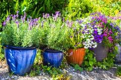 Las plantas y los arbustos en conserva coloridos hermosos en el verano cultivan un huerto Foto de archivo