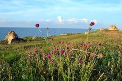 Las playas del mar de Azov Fotografía de archivo libre de regalías