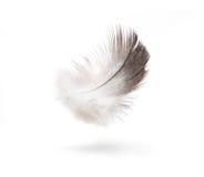 Las plumas aislaron el fondo blanco Fotografía de archivo libre de regalías