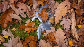 Las plumas de pájaro, hojas, palillos Foto de archivo libre de regalías