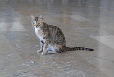 Las plumas del gato consisten en los modelos amarillos y grises blancos imagen de archivo libre de regalías