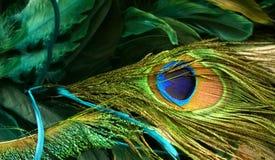 Las plumas del pavo real Imágenes de archivo libres de regalías