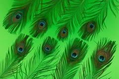 Las plumas del pavo real agrupan endecha del plano en fondo verde fotografía de archivo
