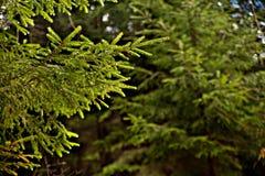 Las po deszczu zdjęcia stock
