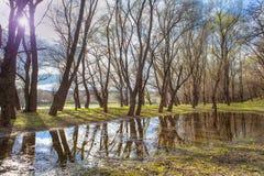 Las po deszczu Zdjęcie Stock