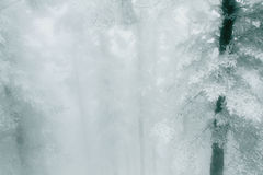Las po śniegu Zdjęcie Stock