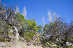 Las pod niebem Obrazy Stock