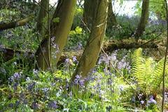 Las podłoga Zdjęcie Royalty Free