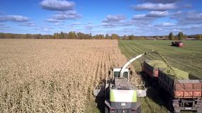 Las podadoras del forraje de la visión aérea vierten follaje del maíz en el remolque metrajes