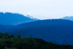 Las podczas zmierzchu Zdjęcia Stock