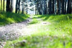 las pogodny Obraz Stock