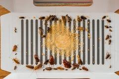 Las porciones de cucarachas catched por la etiqueta engomada o el colector Imágenes de archivo libres de regalías