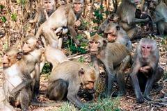 Las porciones de monos se aterraron salto y movimiento de la precipitación en el bosque Imagen de archivo libre de regalías