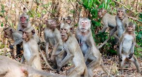 Las porciones de monos se aterraron salto y movimiento de la precipitación en el bosque Fotos de archivo