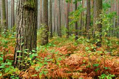 las prehistoryczny Fotografia Royalty Free