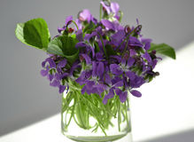 Las primeras flores Foto de archivo libre de regalías