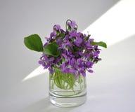 Las primeras flores Imágenes de archivo libres de regalías