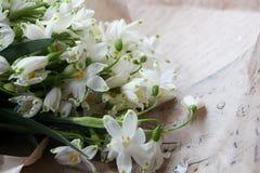 Las primeras flores de la primavera en papel Imagen de archivo